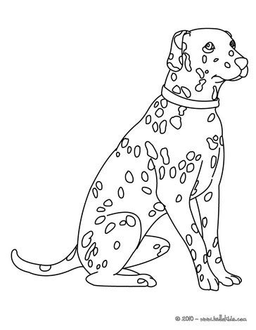 dalmatian coloring pages hellokids com