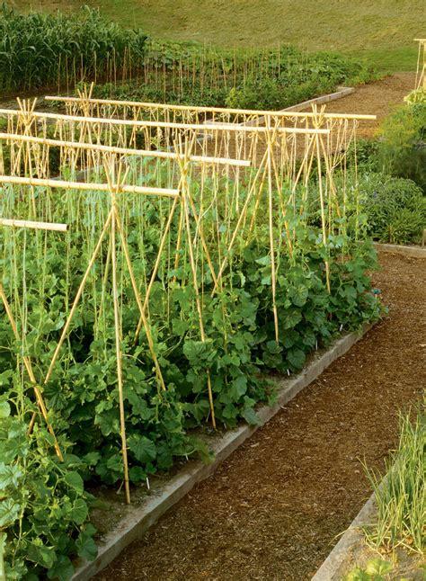 Trellis Poles bamboo canes for garden fencing trellising for climbing plants