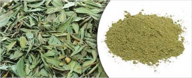Large Leaf Tropical Plant - megha products products henna leaves henna powder senna leaves senna pods multani mitti