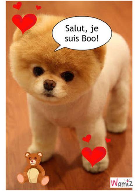chien pomeranian pin chien pomeranian on