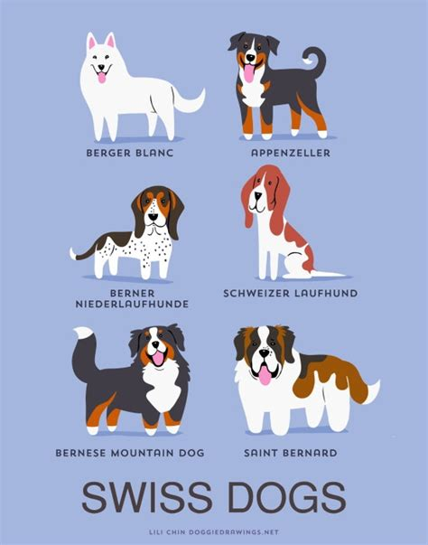 Your Dogs Nationality by This List Will Tell You Your Dogs Geographic Origin