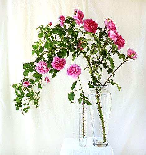 roses friends jardin classic gardens