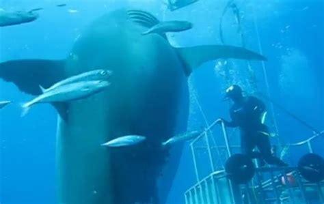 australia el gran tibur 243 n blanco documental completo youtube tiburones tiburon submarino documental online gratis en deep blue 191 el tibur 243 n blanco m