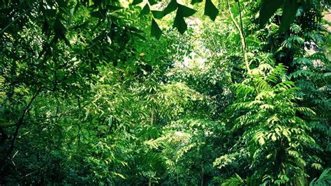 What Is The Definition Of Canopy by Canopy Definition Meaning