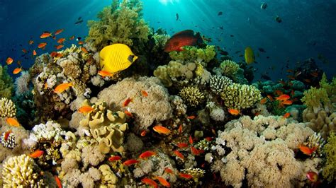 coral reef desktop wallpaper