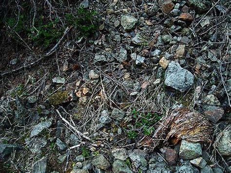 Silver Garden Spider Diet Image Gallery Spider Habitat