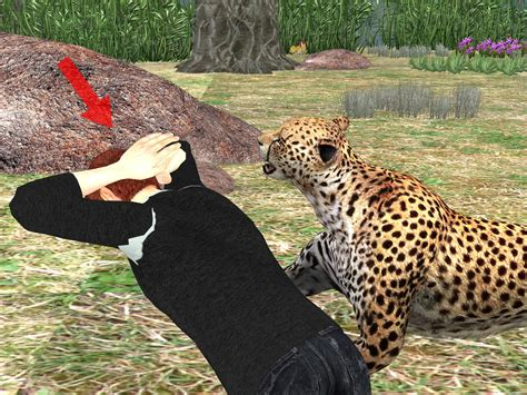 how to attack how to survive a jaguar attack 7 steps with pictures wikihow