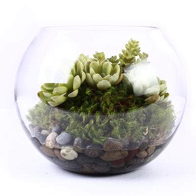 Glass Planter by Glass Succulent Planter