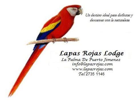 Imagenes De Lapas Rojas | lapas rojas puerto jimenez