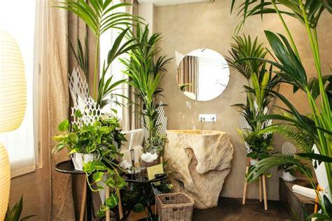 plante verte pour chambre les plantes vertes dans la chambre annikapanika