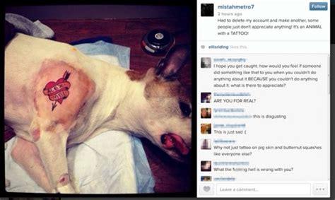 tattoo animal identification hunde mit piercing t 228 towierte hunde und pudel styling dog