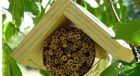 Wie Baut Ein Insektenhotel 3846 by Insektenhotel