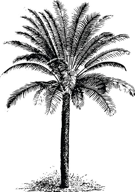 Free Clipart Of A palm tree