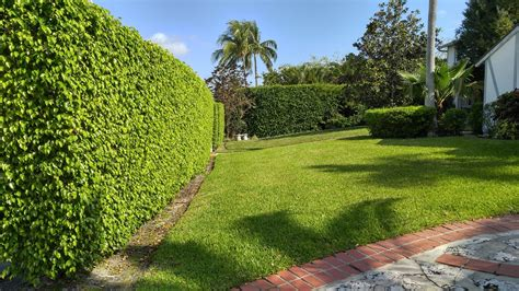 palm gardens pest palm gardens