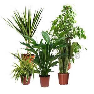 pack 5 plantes d 233 polluantes d int 233 rieur v2 plantes vertes