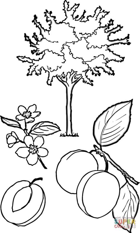 birch leaf coloring page birch leaf coloring coloring pages