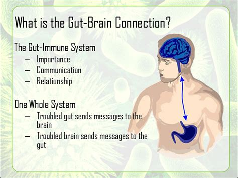 gut intelligence the wisdom to the the guts to do something about it books gut brain connection haus therapeutic solutions
