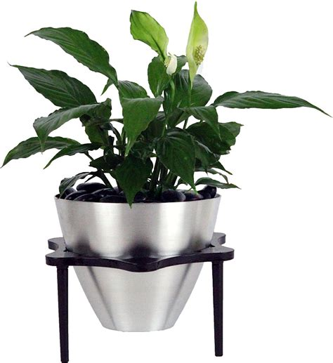 planters archives indoor plant tips
