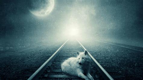 white wolf   full moon hd wallpaper wallpaper