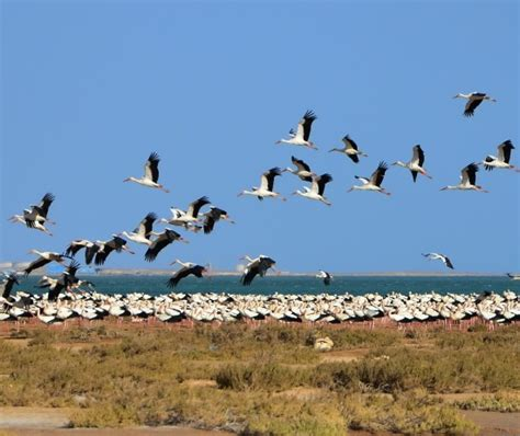 does climate change affects bird migration the new ecologist