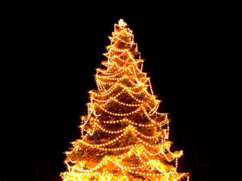 picture of tree with lights hang tree lights visihow