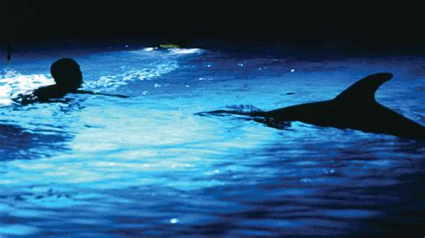 the big blue film quotes 屬於盧貝松的 碧海藍天 大寫浩瀚的藍色 le grand bleu fliper