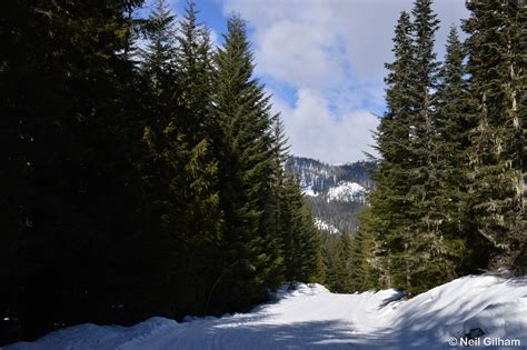 Cabin Creek Nordic Ski Area by Northwest Outdoors Cabin Creek Cross Country Skiing 2
