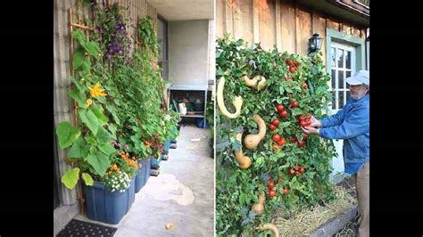 backyard vertical garden gardening the backyard vertical garden the creative plant