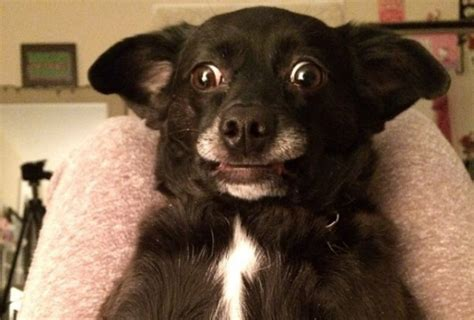 derpy puppy 13 derptastic dogs who make you think about stereotypes