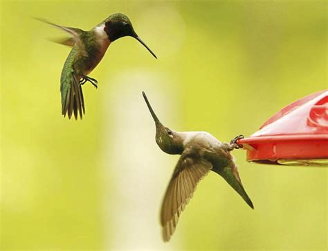 Bird Feeders Tulsa Seen Hummingbirds And Other Wildlife At Oxley Nature