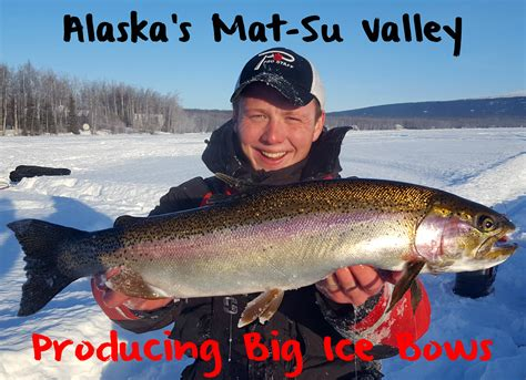 Mat Su by Alaska S Mat Su Valley Producing Big Bows Pautzke