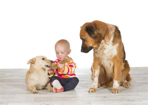 do dogs get jealous jealousy not just in humans lover s news