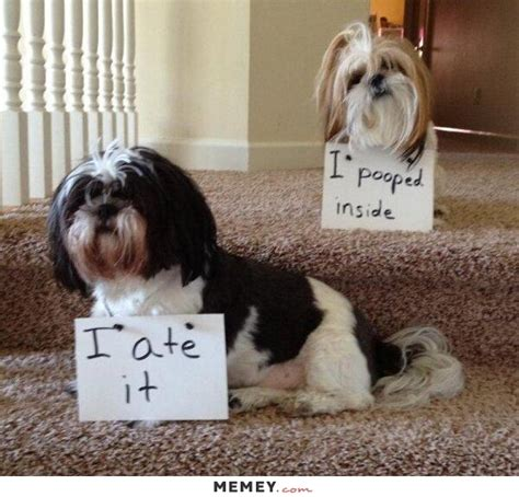 pooping puppy pin pictures on
