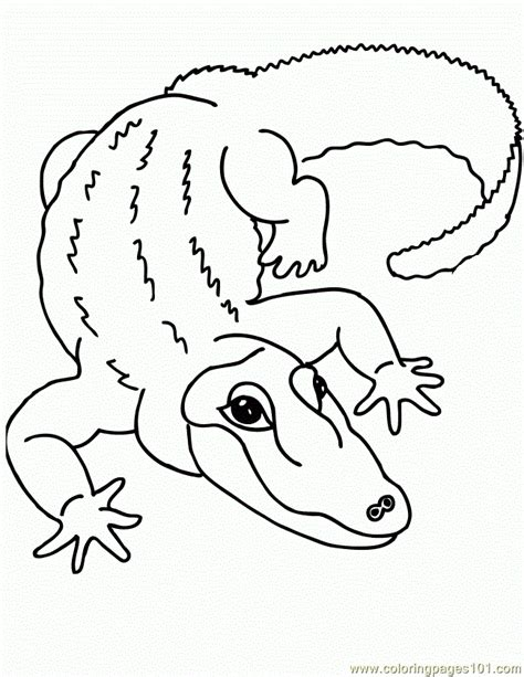 alligator coloring page pdf coloring pages zoophonics alligator 650x841 amphibians
