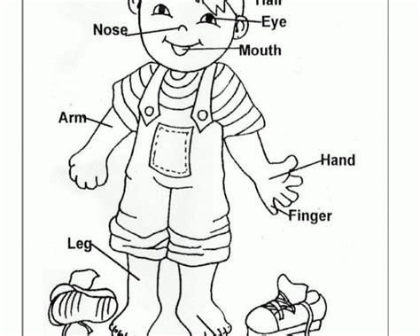 kindergarten activities my body 110 best crafts all about me my body images on