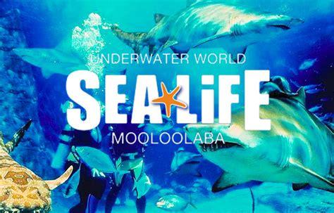Tropical Beach Theme - underwater world sea life mooloolaba gold coast day tours
