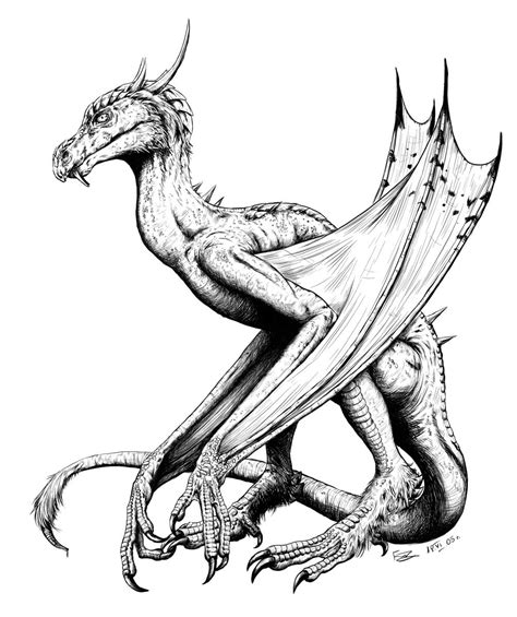 Wyvern Drawing