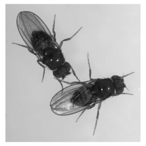 fruit flies are linkedin genes determine social