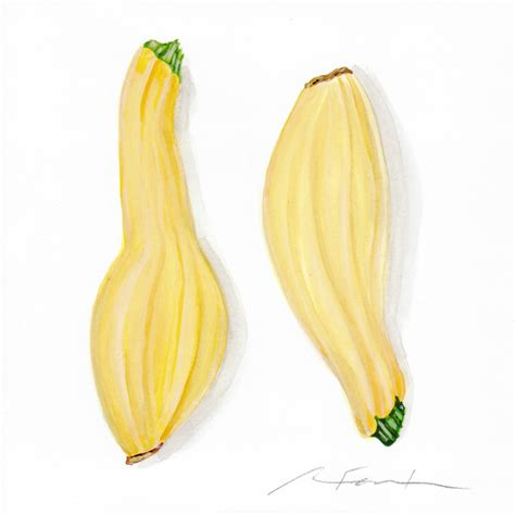 summer squash watercolor painting angela faustina