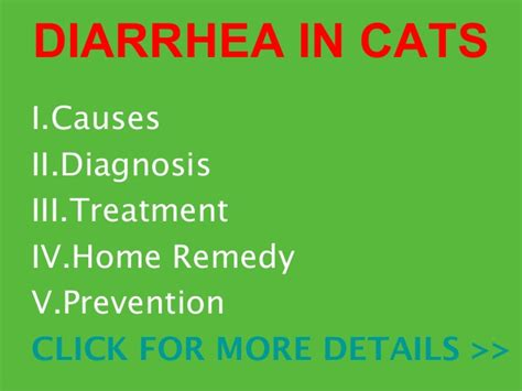 diarrhea in cats causes diagnosis treatment and prevention
