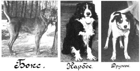 pavlovs dogs a gallery of pavlov s dogs neatorama