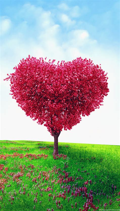 full hd video love dose lovely android full hd love wallpaper kezanari com