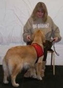 island golden retriever club island golden retriever club pet therapy