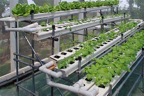 gardening hydroponics ã learn the amazing of growing fruits books benefits of hydroponic indoor gardening greenhouse growers
