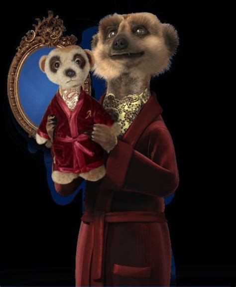 Car Insurance Not On Compare by Compare The Meerkat Is Not Proof Of Car Insurance
