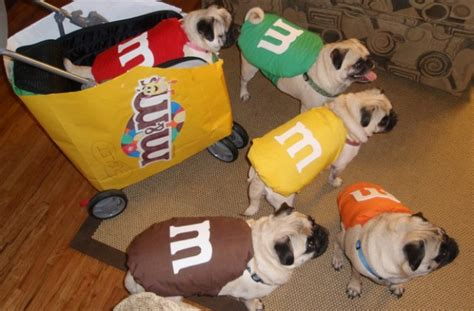 pug puppies in costumes photo of pug puppies in costumes litle pups