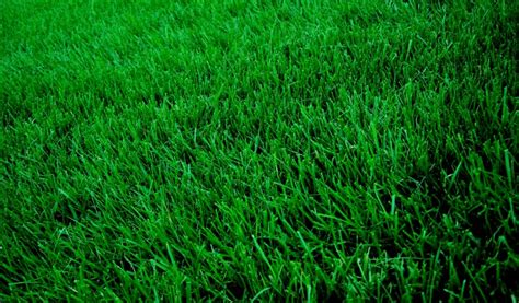 raleigh nc lawn care service lawn mowing from 19 lawnstarter