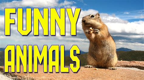 funny animals compilation   funny animal