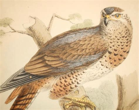 falcon symbolism totem animal powers meaning