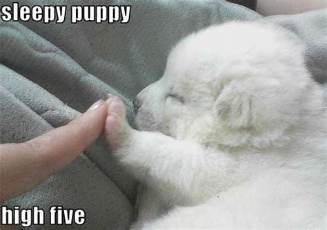 puppy high five sleepy puppy high five